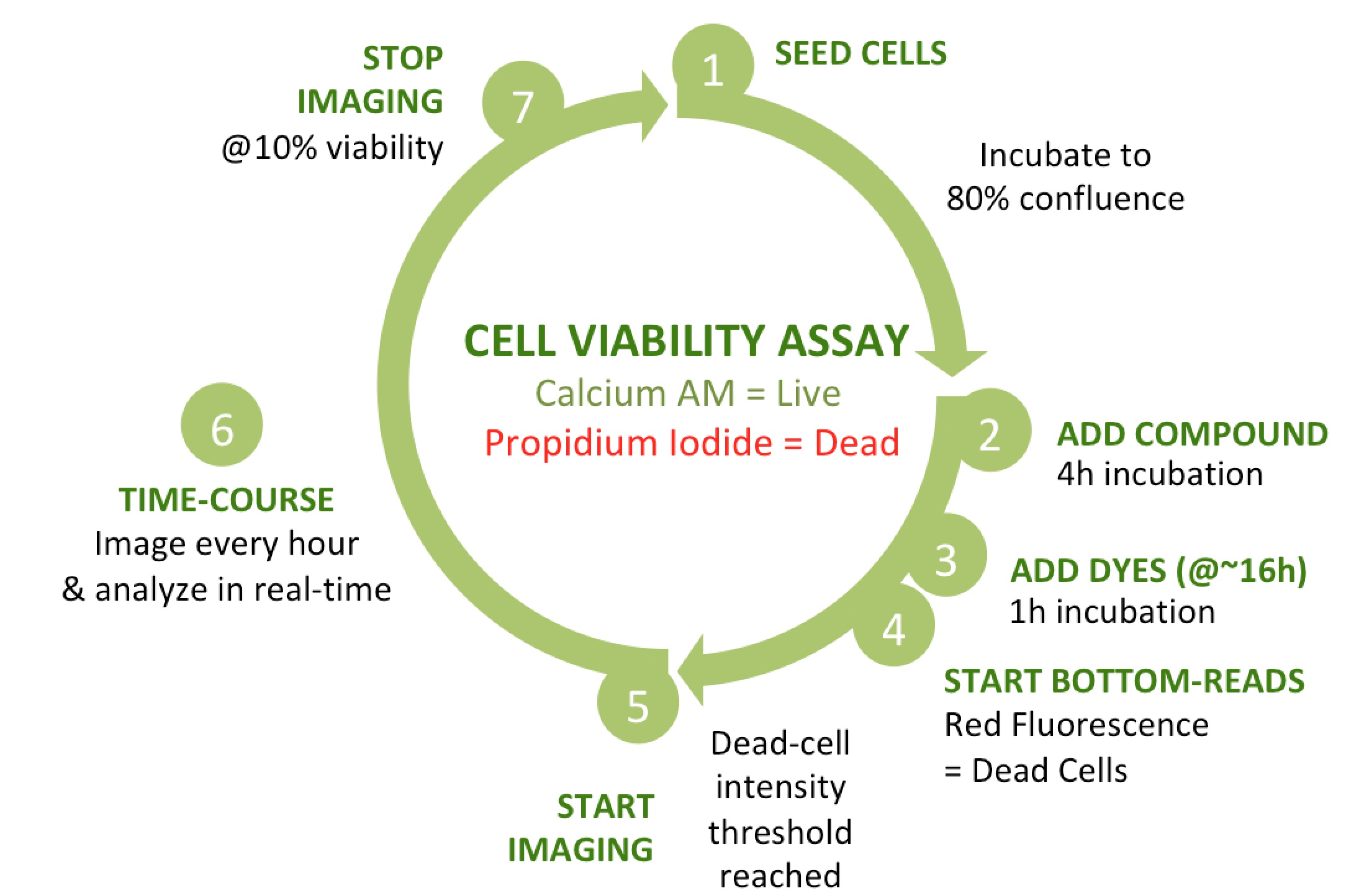Live-Dead assay time course_fig2_