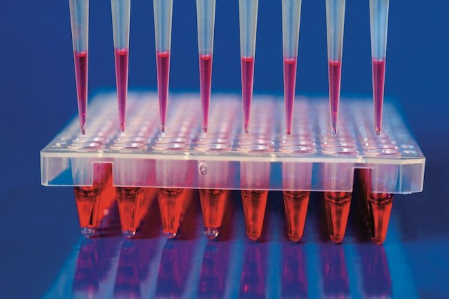 Molecular_diagnostics_and_sample_to_answer_1.jpeg