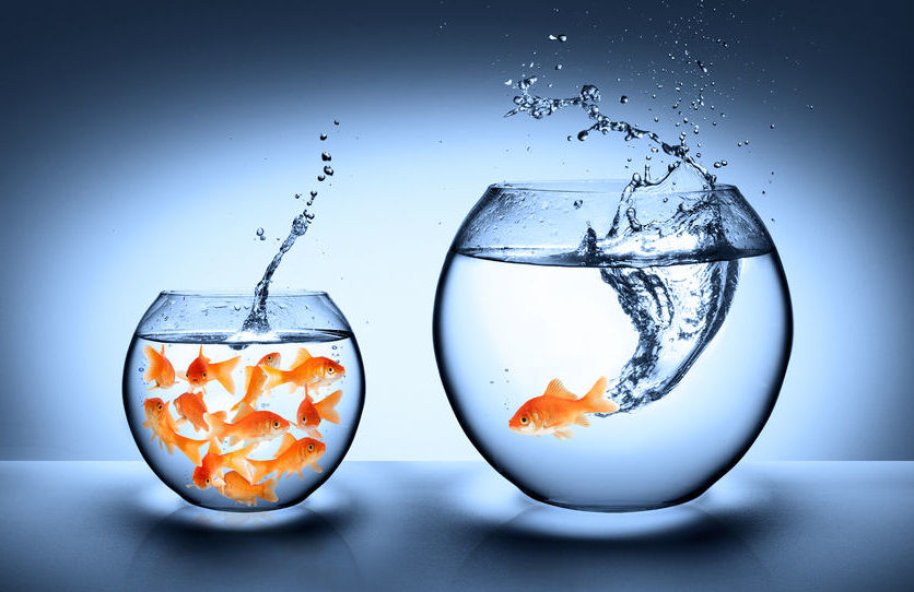 Monitoring cell culture is like keeping goldfish - automated cell counting keeps cells alive