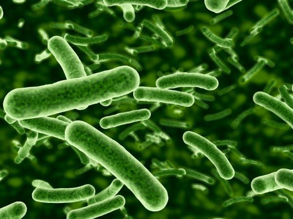 antibiotic-resistant-bacteria mass spectometry
