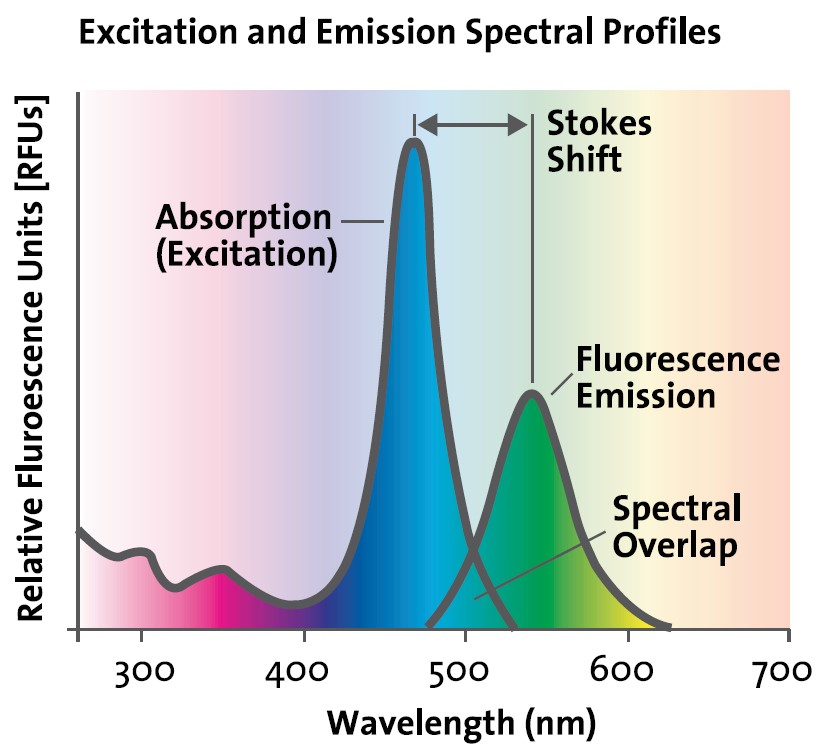 How to develop an optimal fluorescence assay 4823811390