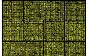multiplex-assays