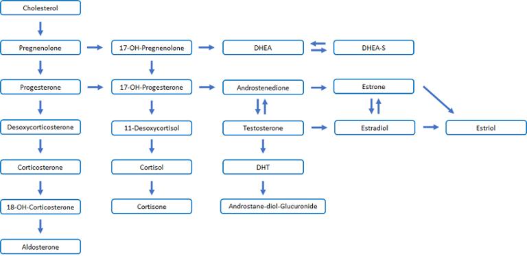 RV_steroid pathways-2-1