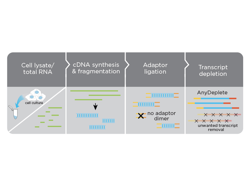 Fully integrated workflow for whole transcriptome analysis
