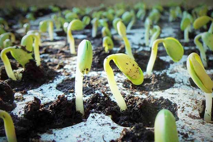 A whole transcriptomics view to study drought resistance
