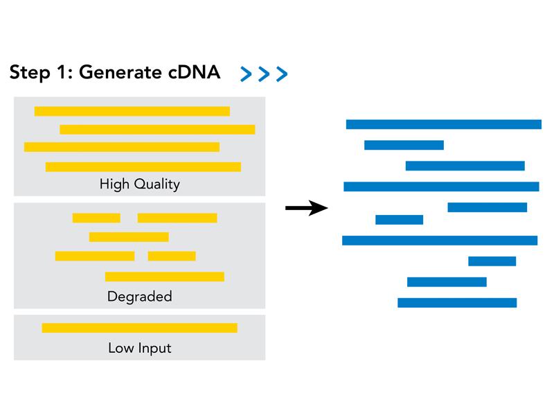 SPIA Workflow amplified cDNA