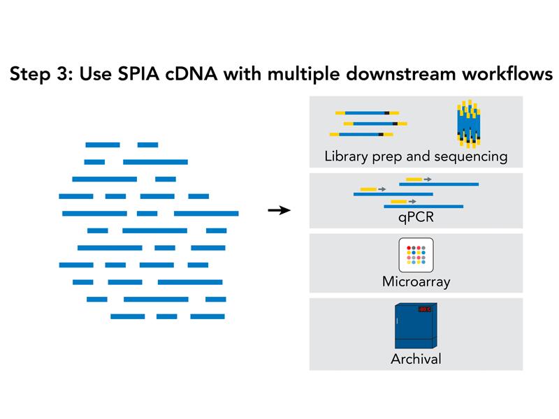 SPIA cDNA library