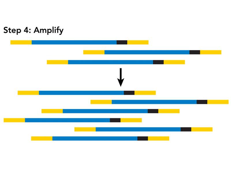 Anydeplete Amplify transcripts
