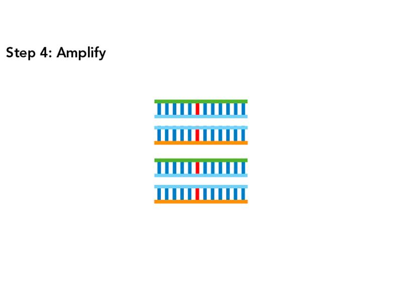 SPET Amplify