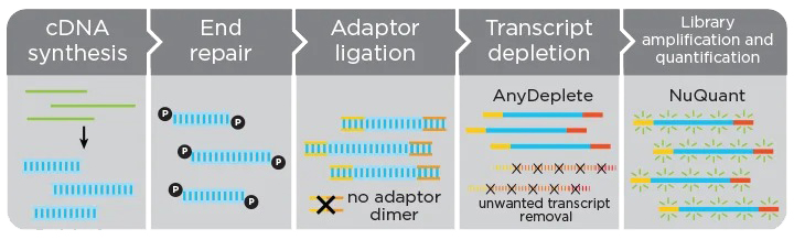 RNA-Seq Library Prep Nuquant