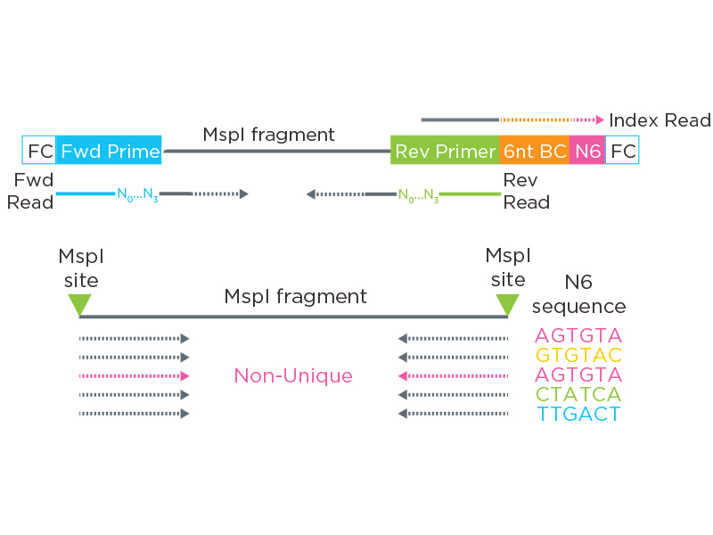 Ovation RRBS methylation-seq library structure