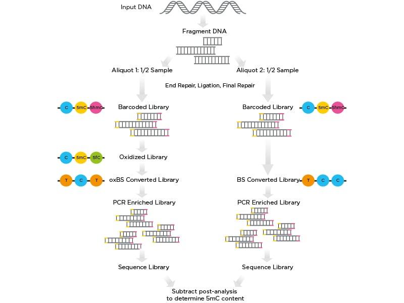 Ultralow  Methyl-Seq workflow bisulfite sequencing