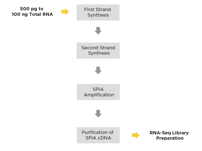 Ovation RNA-Seq workflow