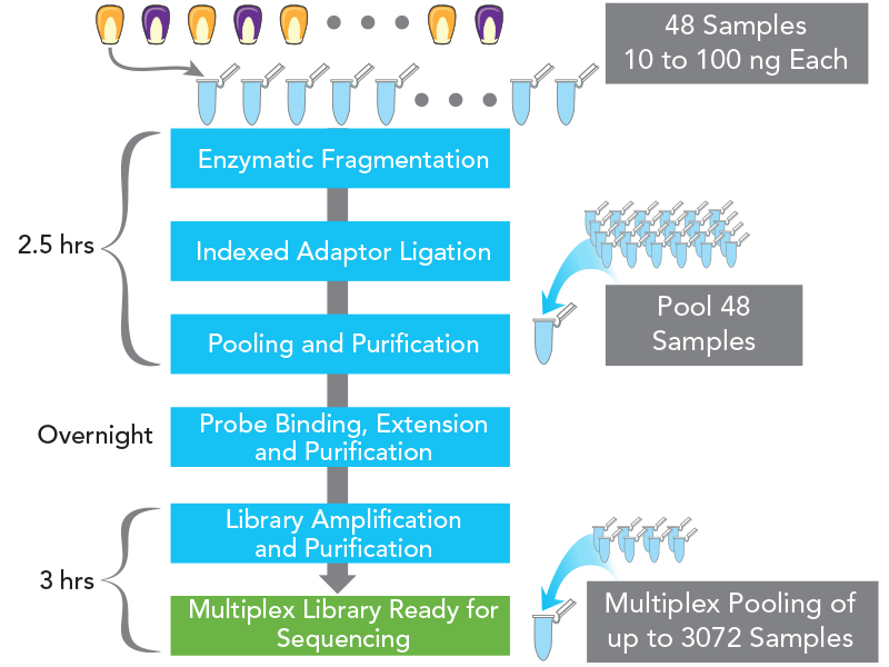 Allegro Targeted Genotyping, SNP workflow