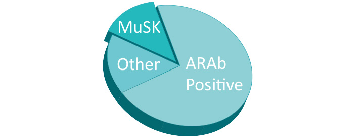 ~ 50 % of all seronegative MG patients is MuSK positive